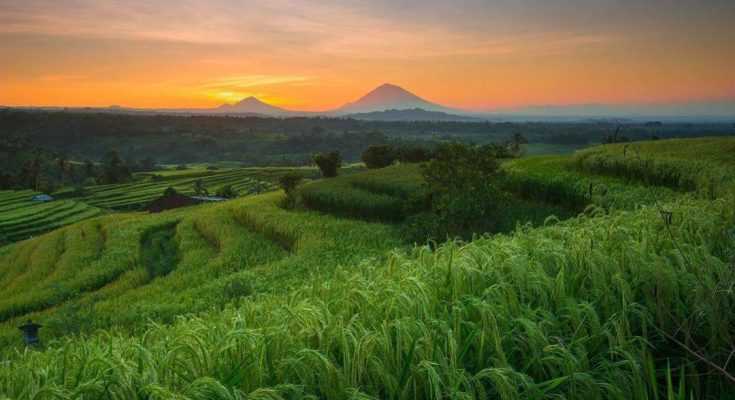 Tourist Attractions in Bali Are Starting To Open with 50% Visitor Capacity and Health Protocol